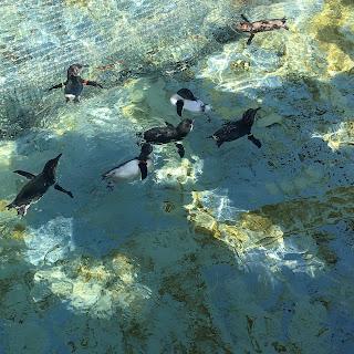 葛西臨海水族園のペンギン
