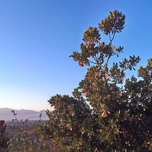 autunno panorama natura