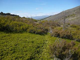 Sendero. Ladera del Cerro del Robledo Castellar