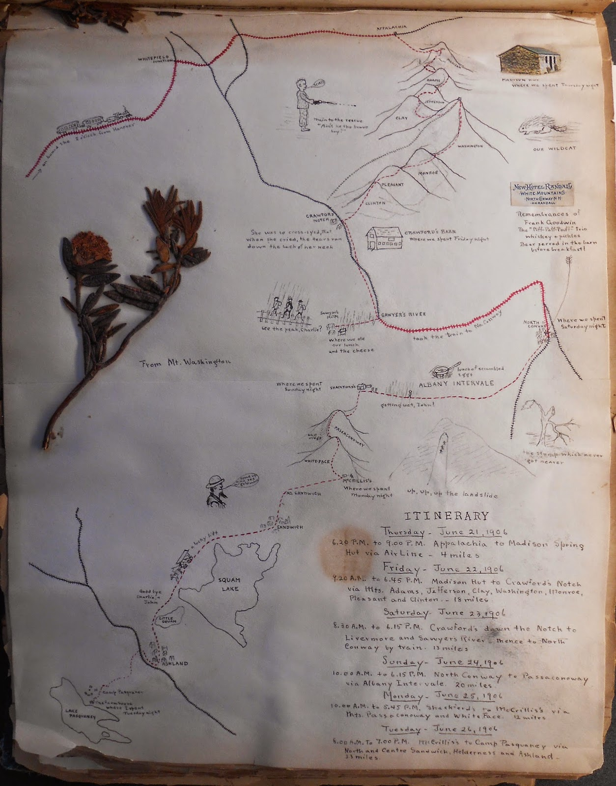 A hand-drawn map and itinerary, as well as a dried and pressed stem of flowers.