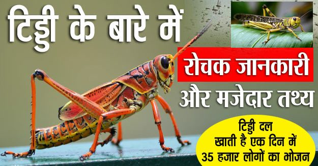 Interesting information and facts about grasshopper