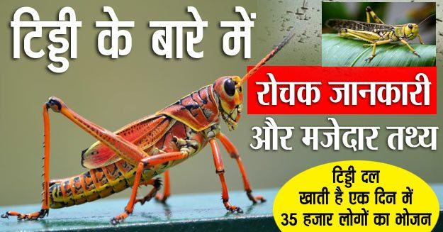 टिड्डा/टिड्डी के बारे में रोचक जानकारी और तथ्य-Interesting information and facts about grasshopper