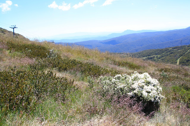 Summer at Mt Buller