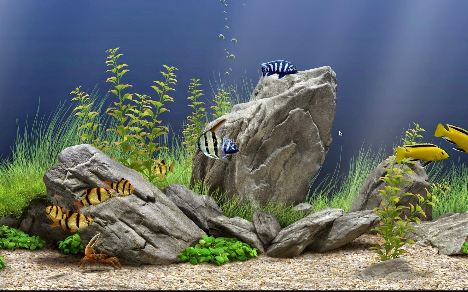 Dream aquarium v1 1 3 2 full crack dileate - Dream aquarium virtual fishtank 1 ...