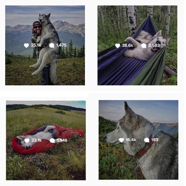 Chùm ảnh siêu cool về chú sói lai cùng chủ đi du lịch khắp thế giới