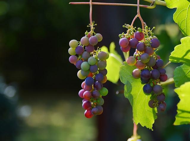 Aprender a elegir un vino según distintos aspectos