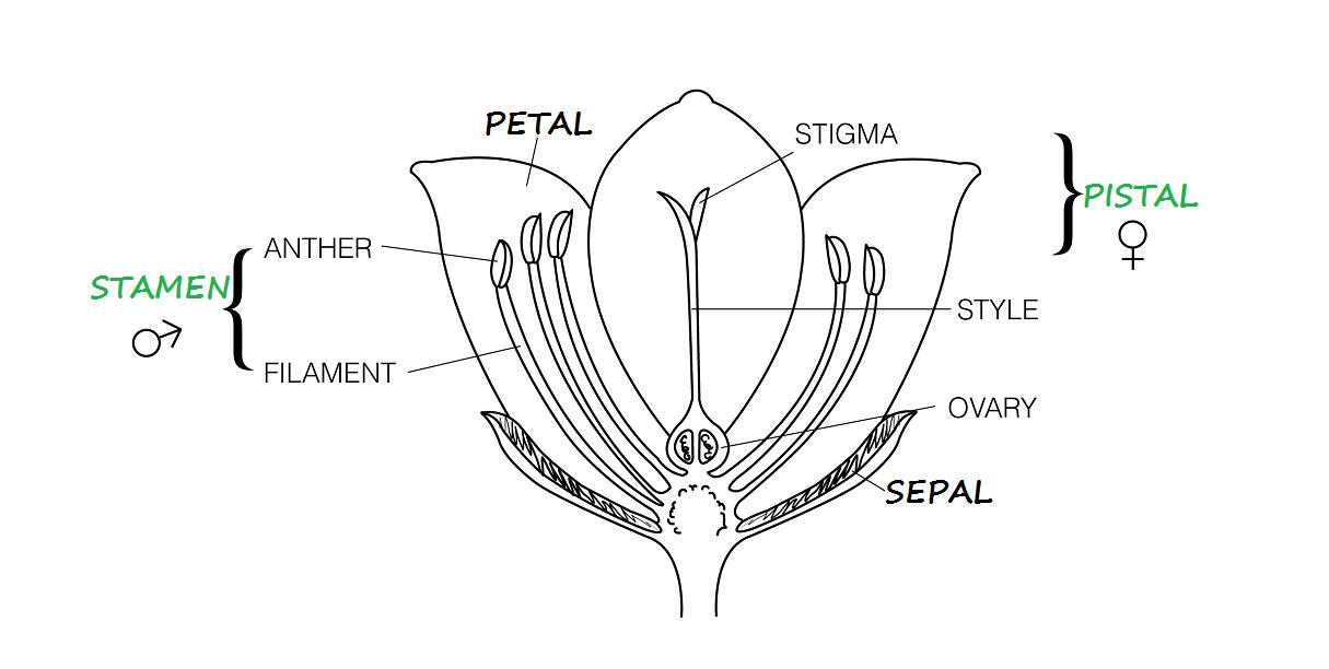 Rose Floral Diagram Wiring Diagramrhwe17mumbenconde: Wiring Diagram Characters At Gmaili.net