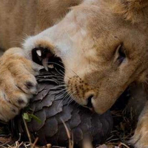 Most Amazing Pictures Of Animals   www.imgkid.com - The ...