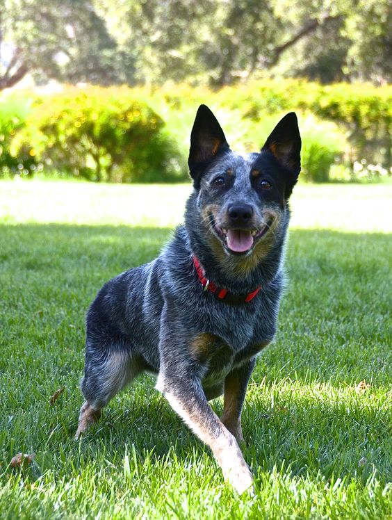 Top 5 Dogs Which Are Easy To Train