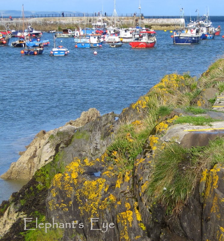 Mevagissey harbour on a peaceful July day in 2009