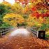 5 Lokasi Terbaik Nikmati Keindahan Musim Gugur di Jepang