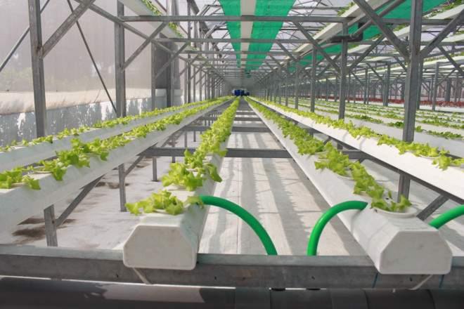 Dùng phần mềm công nghệ để xuống giống và thu hoạch rau