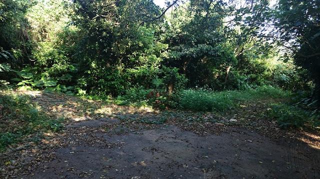 保栄茂グスクの小道の写真