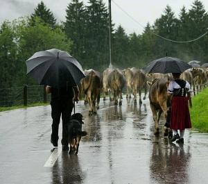 informasi menjaga kesehatan saat hujan