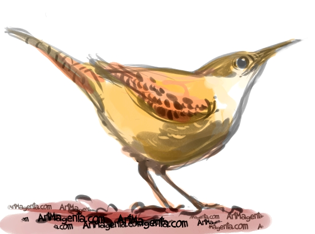Canyon Wren sketch painting. Bird art drawing by illustrator Artmagenta