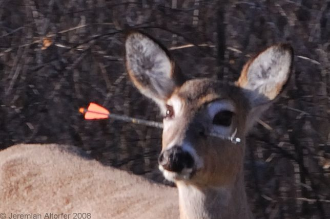 Funny Freast Deer With Arrow In The Head Keeping it real since 2000! funny freast blogger