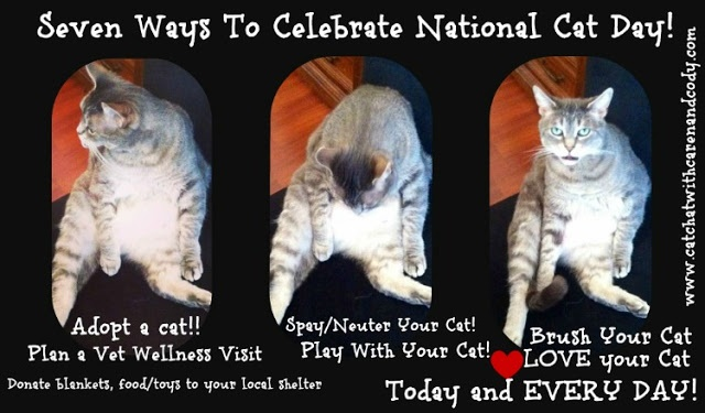 Cat Chat With Caren And Cody Today Is National Cat Day But Cat Lovers Know That It Is Really Every Day