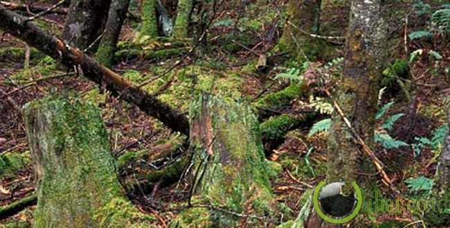 Filter Meniru Dekomposisi Hutan