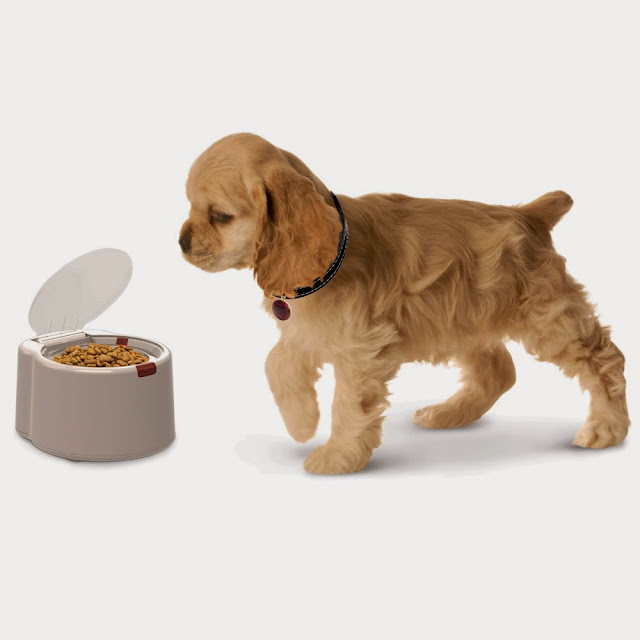High-Tech Gadgets For Your Dog (15) 13