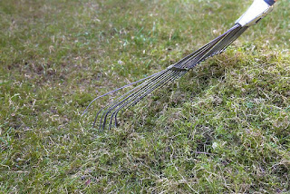 Moss in the lawn: 5 effective ways to control