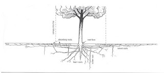 Diagram of shallow and extensive tree roots