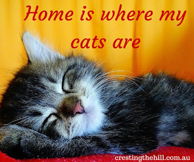 Home is where my cats are - Why Midlife's Fabulous ~ Crazy Cat People