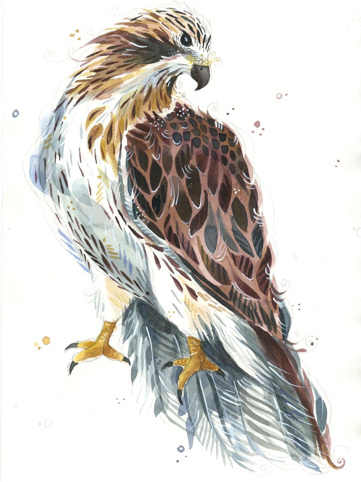 Hawk painting watercolor - photo#47