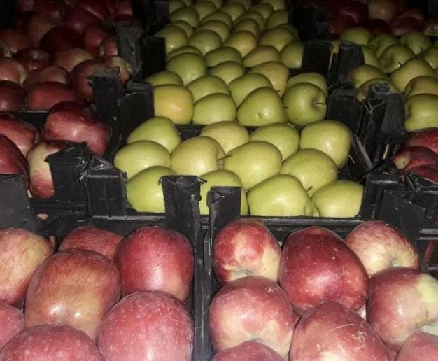 تحديد موعد بدء تسويق التفاح في السويداء من المزارعين.؟