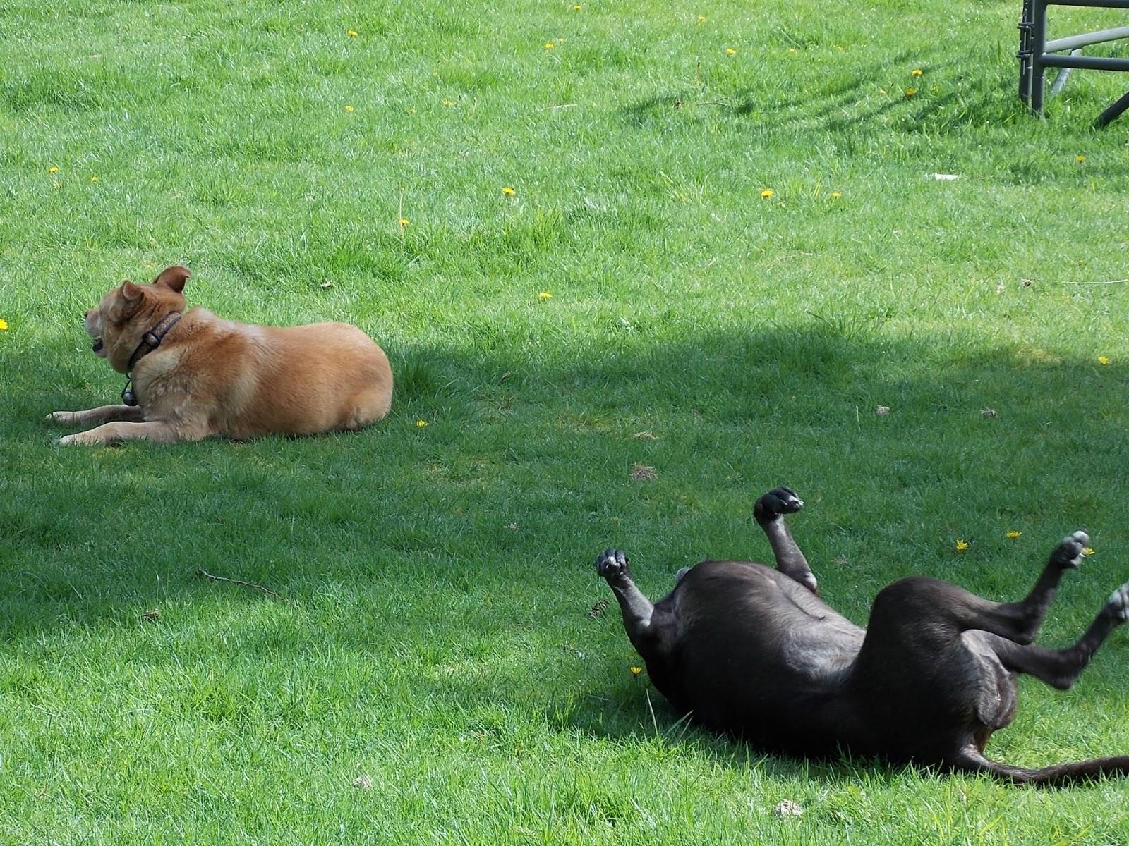 Emerald Aisle Farm: Very happy dogs