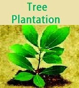 Hindi Essay | निबंध: Short Essay on 'Tree Plantation' in ...