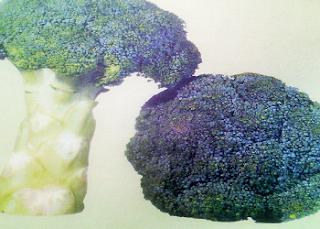 Kandungan Gizi dan Manfaat Brokoli Serta Efek Samping Yang Ditimbulkan Bagi Penyakit Tertentu