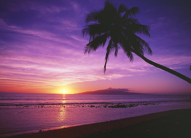 Purple beach sunset with palm tree