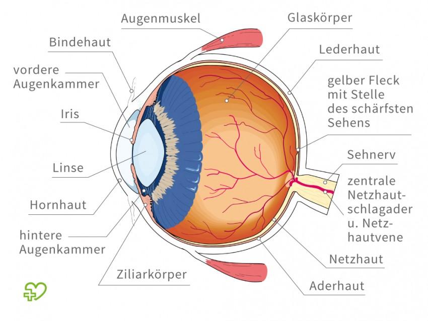 natasa.m.sajlovic: Die Sinne des Menschen-Sehen (visuelle ...