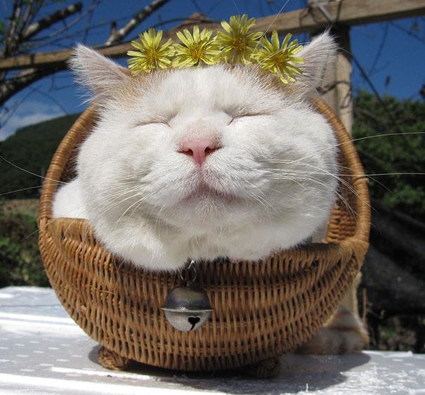 Shironeko, The Happiest And Sleepiest Cat Ever-2