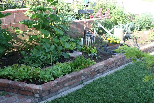 urban garden, spring gardening