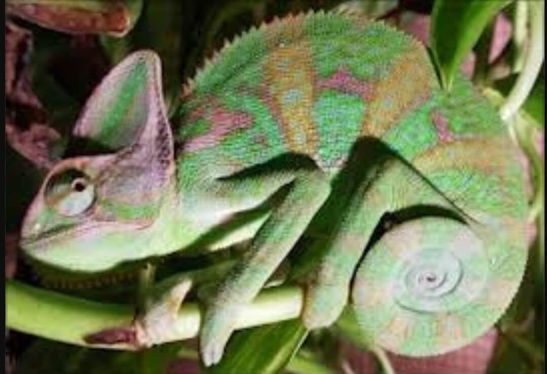 contoh Adaptasi Hewan Untuk Melindungi Diri Contoh-contoh Adaptasi Hewan Untuk Melindungi Diri