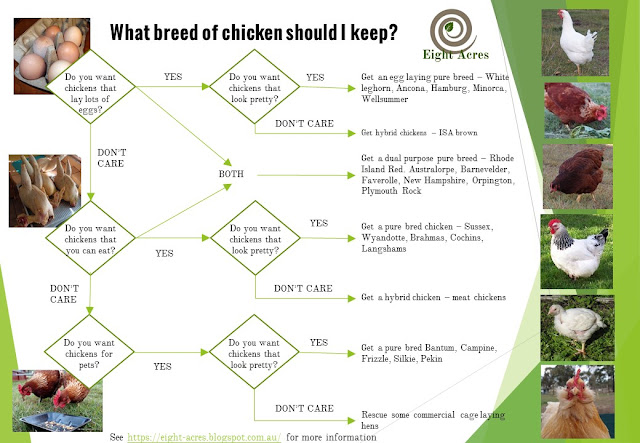eight acres: What breed of chicken should I get?
