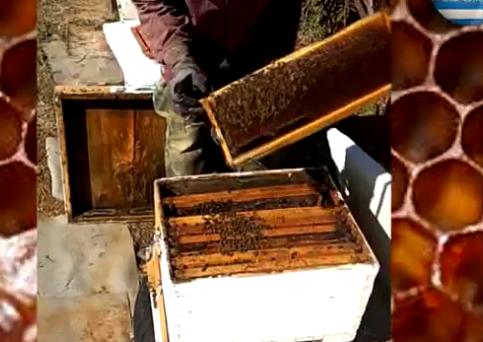Επιθεώρηση μελισσιού 26/02/2019 στο κέντρο της μιας και μοναδικής Μακεδονίας μας!