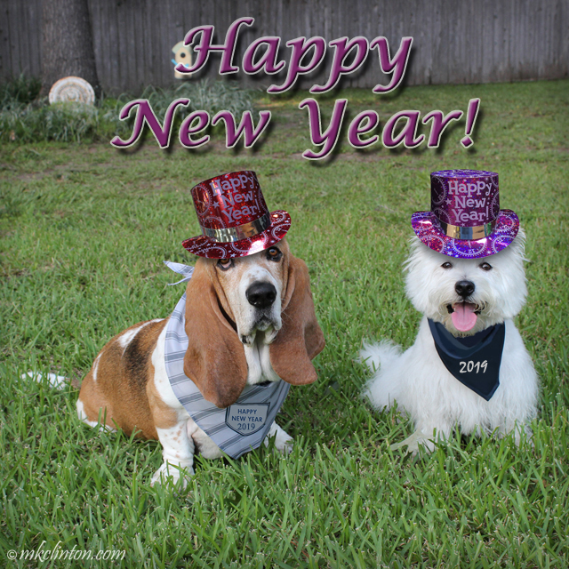 Two dogs celebrating 2019