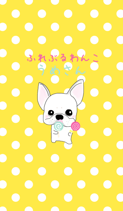 French bulldog wanko Ume