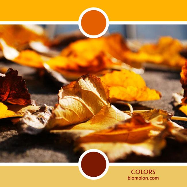 variedad_en_color_color_68