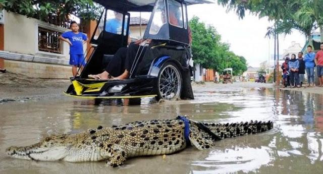 Kesal Tak Kunjung Diperbaiki, Warga Gorontalo Lepas Buaya di Jalan