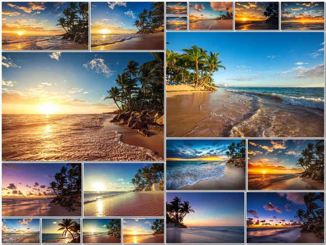 تحميل 19 صورة لشجرة النخيل بالقرب من الشواطئ الاستوائية بجودة عالية