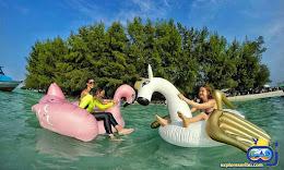 paket wisata pulau kelapa pulau dolphin
