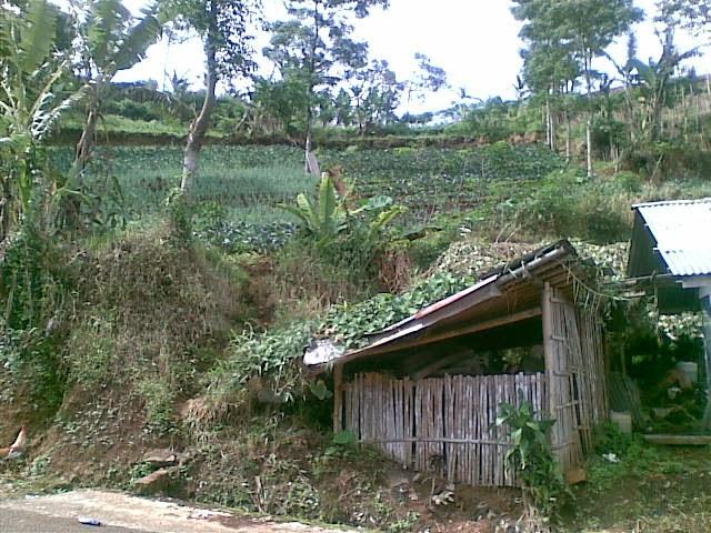 Foto%25285352%2529 Jual Tanah Di Puncak 2, Murah Jual tanah di cipanas jual tanah di puncak jual tanah di puncak2