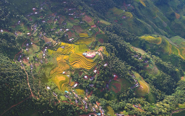 Now is the best time to see terraced rice fields in Mu Cang Chai, Vietnam 3