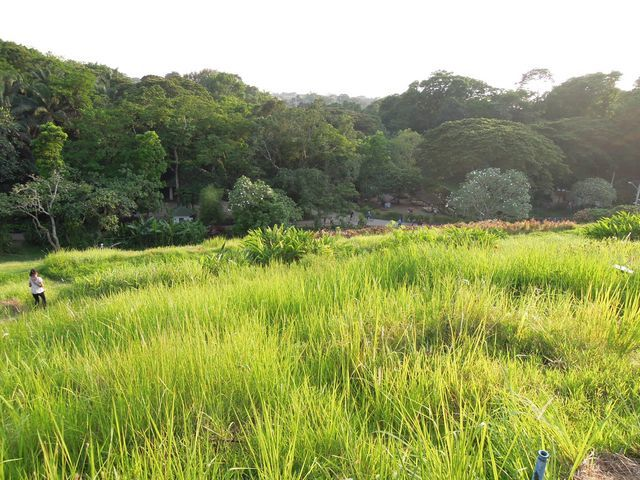 Grass in La Mesa Eco Park in Quezon City