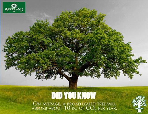 Importance Of Growing Trees