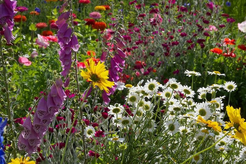 Flores rosas, amarillas y blancas
