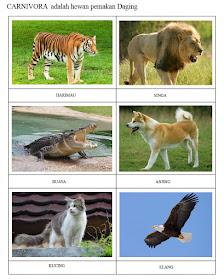 Hewan Pemakan Hewan Lain Disebut : hewan, pemakan, disebut, Hewan, Pemakan, Daging, Disebut, Carnivora, Tugas, Sekolah